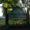 今年初キャンプは初スウィートグラス