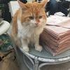 【猫ボランティア体験記】東京キャットガーディアンで「ねこ活」してきました!