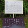 万葉歌碑を訪ねて(その1057)―奈良市春日野町 春日大社神苑萬葉植物園(17)―万葉集 巻三 三三四