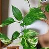 【観葉植物】室内にだって、環境問題はあるよ