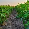 【家庭菜園】土の入れ替えは何を目安にすると良いの?
