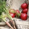 【家庭菜園】大葉と空心菜を育ててみる【種蒔き】