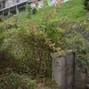2013/09/09 春風が秋の新芽を吹く