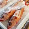 2019年3月19日 小浜漁港 お魚情報
