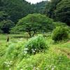 里山さんぽ  -  あきる野『 横沢入 』