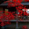 福井県鯖江市西山公園はもみじの名所でもある
