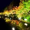 紅葉の季節はポジティブになれる!?緑からオレンジへの色の変化