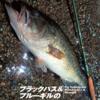 【バス釣り雑誌】ブラックバス&ブルーギルのフライフィッシング特集「フライの雑誌114号」発売!