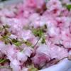ターメリック味噌。モストコット、そして桜。