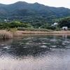 須ノ川上池(愛媛県愛南)