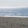素でフィンを忘れてフィンレスサーフィンを余儀なくされる@茅ヶ崎