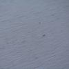 【水虫対策】珪藻土バスマットにカビが生えた!! そんな時はコレを使えば一発解決!!