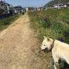 犬の散歩を1時間ほど毎日しています