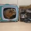 我が家の猫に「爪とぎTV」を設置してみた