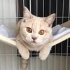 【おすすめ猫のおもちゃ】実際に遊んでいるおすすめ猫おもちゃ5つのレビューをご紹介!