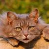 猫がかわいいと言える5つの理由