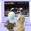 6.9 QUINTET ディファ有明大会【新シリーズ「FIGHT NIGHT」】