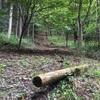 久しぶりに林に入りました。