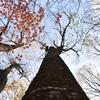 晩秋九重山写真②~秋と冬の境目を撮る~