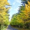 済州島(チェジュ島)秋のフォトスポット #済州大学イチョウ並木