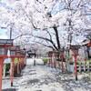 【六孫王神社】灯篭を彩る桜トンネル!恋の架け橋で縁結び&おみくじも♪