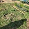 出張ピースファーム!家庭菜園のリフォーム承ります。