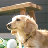 ≪DOG GARDEN≫ 犬の習性