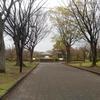 春を告げる桜 静岡城北公園の枝垂れ桜