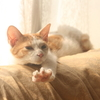 猫の子に太陽じゃれてじゃれてじゃれて 杉山久子