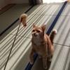 猫と遊ぶ一日