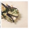 ヒラメキ料理箱4 ~夏の春巻き、ナスと鶏ミンチ~