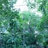 【板橋区立熱帯環境植物館】のミニ水族館がすごかった!