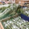 大阪府和泉市にある農林産物直売所【いずみファーマーズ 葉菜の森】で『紅くるり大根』を買って来た!
