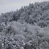 飛騨の冬景色【肴も白く包まれました】