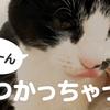 【ロフトが好きで上ったり降りたりが楽しそうな おばあちゃん猫 #41】