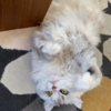 こたつでみかんと猫のお供におすすめ( ΦωΦ )「あなたの思い出紡ぎます 霧の向こうの裁縫店」の感想( @minato_sho718 さん )