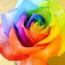 世界中の花を持って