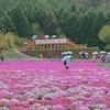 連休明けの「富士芝桜まつり」と「富士花鳥園」(^_^)v