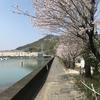 筆山、お花見散歩: 高知のオススメ桜スポットをくわしくご紹介