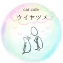 cat cafe ウイヤツメ