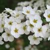 庭の春の花2