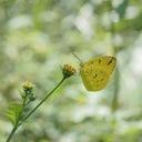 ButterflyTakajiのブログ