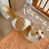 自分で棚を開けてご飯の袋を取り出す天才猫!(つまりは食いしん坊w)