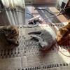 冬の猫たちはやはり可愛さ2倍増し??
