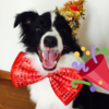 今日はモニカ1歳のお誕生日でした!