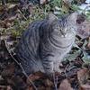 私のブログに一度も登場してなかった猫がいる