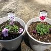 ついつい衝動買い 花の苗が増えすぎた