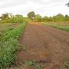 農園日誌ーⅢーむかし野菜の四季