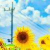 明けまして! 夏ですよ。