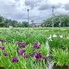 水と緑と花のまち!  山形県長井市(187/1741)